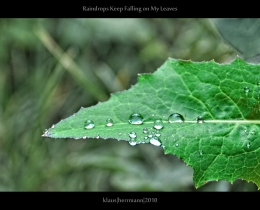 Raindrops Keep Falling on My Leaves