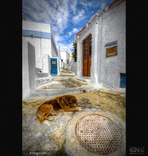 HDR image of a dog lying in the streets of santorini