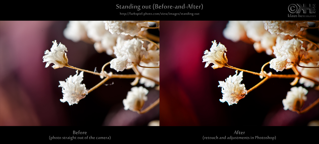 Before-and-after comparison of a flower macro photos