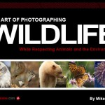 Gordon-Laing-Mike-Kiss-The-Art-of-Photographing-Wildlife-ebook