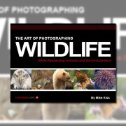 Review - The Art of Photographing Wildlife by Mike Kiss -  featured - 01