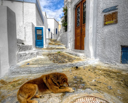 A Dog's Life (HDR)