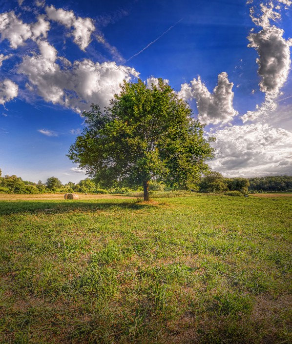 A Happy Little Tree (HDR Vertorama)