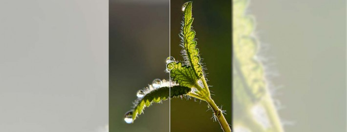 Focus-stacking-in-Photoshop-–-How-to-get-any-depth-of-field-you-need---featured-image